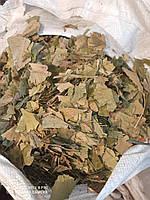 Гингобилоба лист