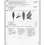Тестовий контроль Біологія 10 клас Профіль Авт: Лінєвич К. Вид: Літера, фото 4