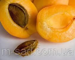 Абрикос Надранний(слабо рослый,скороплодный)2хлетка
