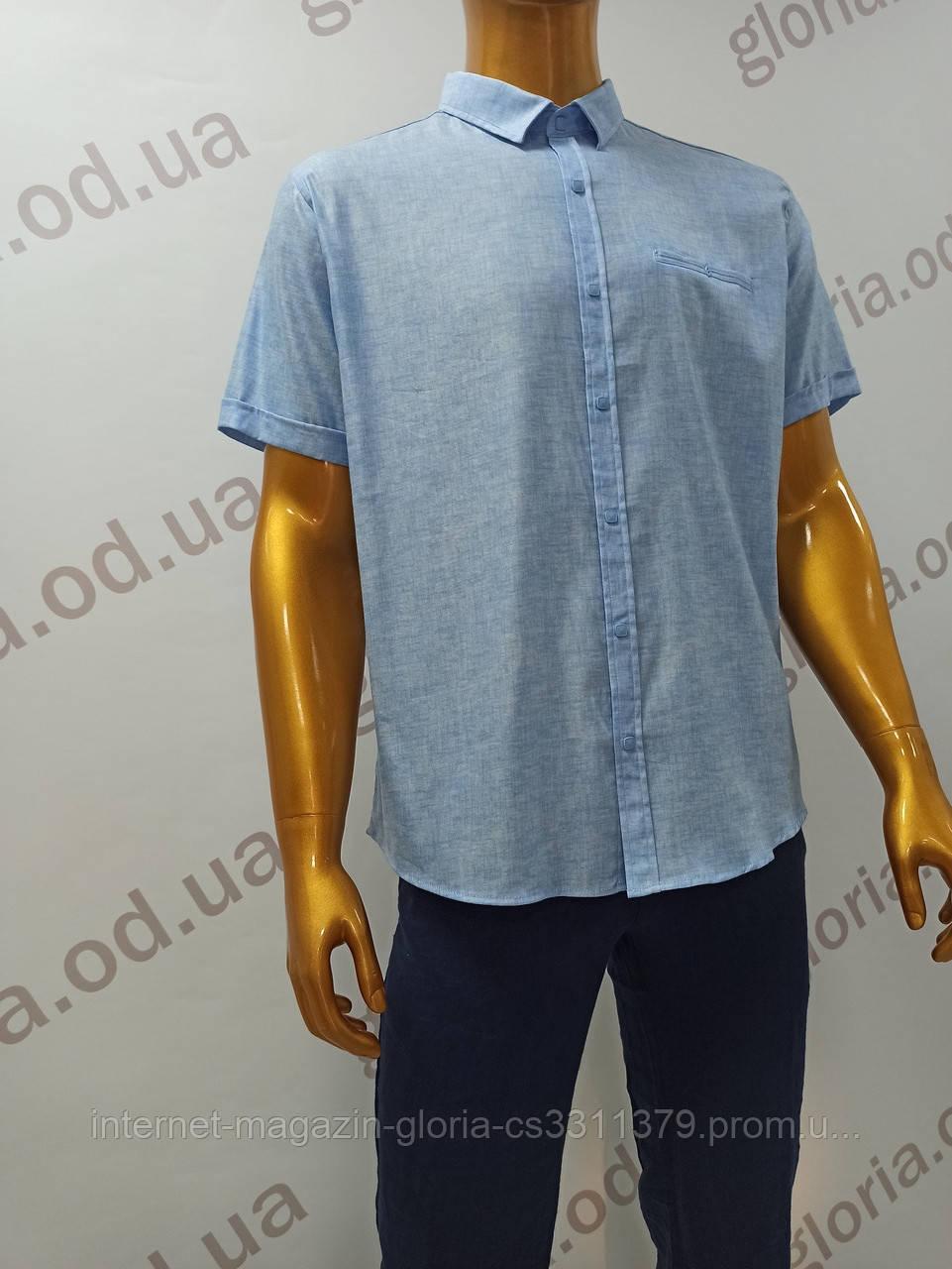Мужская рубашка Amato. AG  29913(г). Размеры: Батал 2XL,3XL,4XL,5XL.