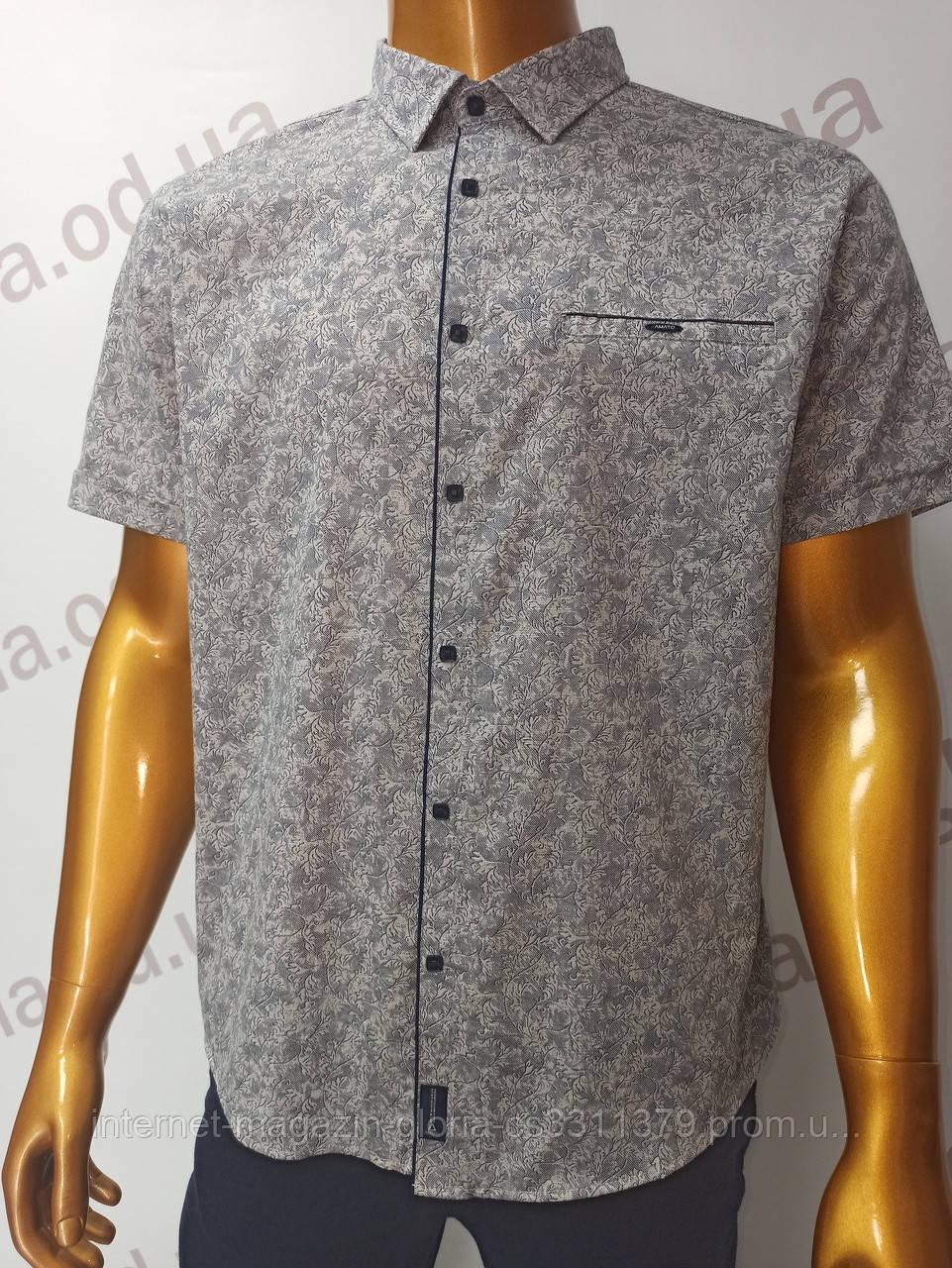 Мужская рубашка Amato. AG29836r. Размеры: 2XL,3XL,4XL,5XL.
