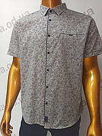 Мужская рубашка Amato. AG29836r. Размеры: 2XL,3XL,4XL,5XL., фото 1