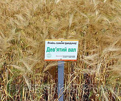 Семена озимого ячменя 9-й вал, элита 2020