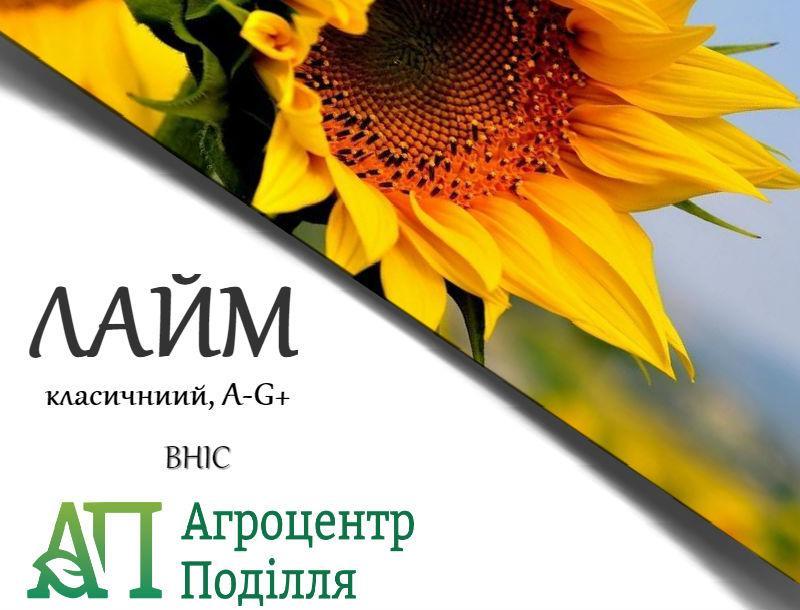 Семена подсолнечника Лайм (стойкий к заразихе A-G+)