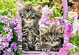 """Пазли """"Кошенята в саду"""" Castorland 1000 елементів, фото 3"""