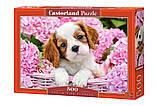 Пазлы Щенок в розовых цветах, 500 элементов Castorland В-52233, фото 2