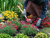 Статьи купить на тематику садоводства