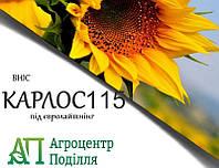 Насіння соняшнику під евролайтинг КАРЛОС 115 ІМІ ВНІС (безкоштовна доставка)