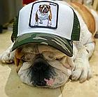 Кепка Бейсболка Тракер с сеткой Goorin Brothers Animal Farm Butch с Бульдогом Камуфляж Хаки, фото 7