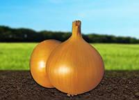 Семена лука озимого Ибис F1 250 000 сем. Никерсон-Цваан