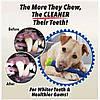 Зубная щетка для собак Сhewbrush Dog Dummy Bone, фото 2