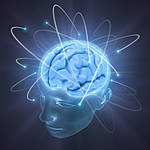 Интеллект не зависит от объема мозга.