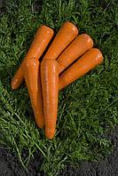 Семена моркови Силвано F1 100 000сем. Никерсон-Цваан