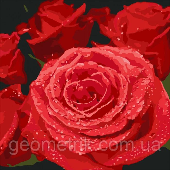 Картина по номерам.  Красные розы 40х40см арт. КНО3089
