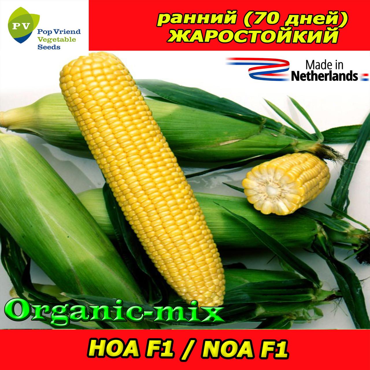 Семена, НОА F1 / NOA F1, сахарная кукуруза, 5 000 семян, ТМ Pop Vriend Seeds (Нидерланды)