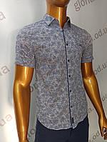Мужская рубашка Amato. AG.19839(g). Размеры:M,L,XL, XXL., фото 1
