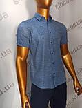 Мужская рубашка Amato. AG.KG19638(g). Размеры: M,L,XL,XXL., фото 2
