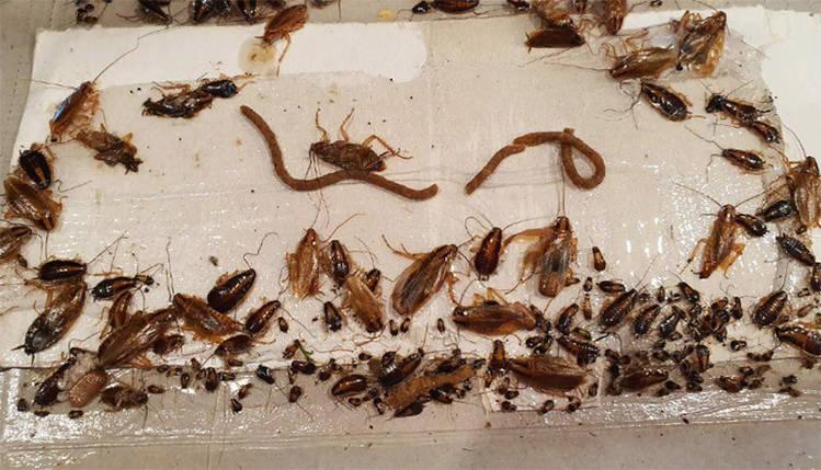 """Клейова пастка-будиночок (липучка) для тарганів та мурах """"Капкан"""" від Ukravit, Україна, фото 2"""