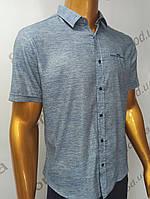 Мужская рубашка Amato. AG.19638-2(s). Размеры:M,L,XL(2), 2XL., фото 1