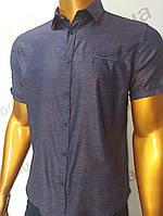 Мужская рубашка Amato. AG.19638-2(f). Размеры:M,L,XL(2), 2XL., фото 1