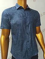 Мужская рубашка Amato. AG.19638-2(si). Размеры:M,L,XL(2), 2XL., фото 1