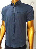 Мужская рубашка Amato. AG.19397-2(s). Размеры:M,L,XL(2), 2XL., фото 1