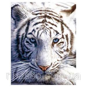 Мини-постер Белый тигр