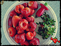 Cool Stuff - Убирает плодоножку у клубники и помидора