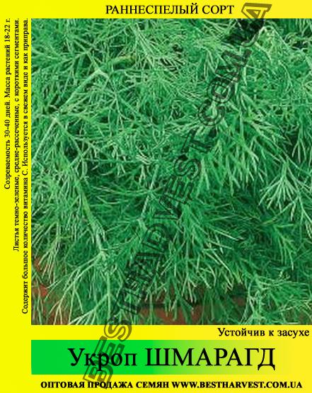Семена укропа «Шмарагд» 25 кг (мешок)