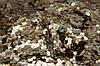 Конфетти, пятиугольники, 40 г, золотистый, PET (201326), фото 2