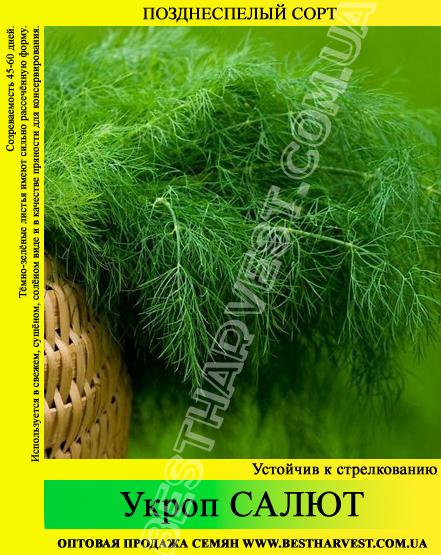 Семена укропа «Салют» 25 кг (мешок)