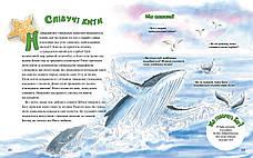 Велика книга маленьких історій про Боже творіння. Пізнаємо прекрасний Божий світ –  Памела та Дуглас Кеннеді, фото 2