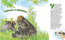 Велика книга маленьких історій про Боже творіння. Пізнаємо прекрасний Божий світ –  Памела та Дуглас Кеннеді, фото 3