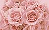 Кремові троянди. Схема повної вишивки бісером