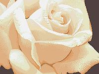 Ніжна троянда Схема повної вишивки бісером