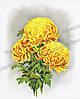 Схема для вышивки бисером Сб-467 Желтые хризантемы