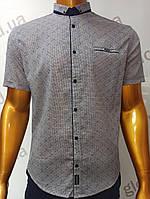 Мужская рубашка Amato. AG.19726-2(b). Размеры:L,XL(2), XXL., фото 1