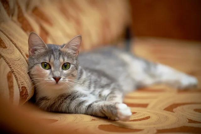 Корм для кошек Schesir • Шезир