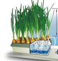 Луковое счастье - вазон для выращивания лука, луковой вазон -для выращевания лука, лук, выращивание лука