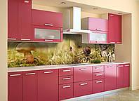Кухонный фартук Грибы (скинали для кухни наклейка ПВХ) мох сова Природа Зеленый 600*2500 мм