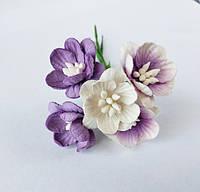 Квіти вишни_СИРЕНЕВЫЙ МІКС 5 шт., фото 1