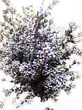 Букет лаванди /сухоцвіт натуральної лаванди/, фото 4