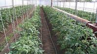 Выращивание хорошей овощной рассады в теплицы