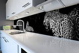 Вініловий кухонний фартух Гепарди скіналі для кухні наклейка ПВХ Коти Тварини Чорний 600*2500 мм