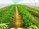Фермерские теплицы под пленку 10Х80 Фермер ПРОФИ -10.2-У (800 м2), фото 10
