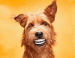 Собакам нужно чистить зубы