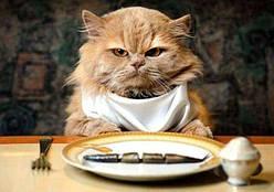 Основные ошибки при кормлении кошки