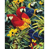 """Картина раскраска по номерам на холсте животные, птицы Идейка """"Разноцветные попугаи"""" 40х50 см, сложность 3"""