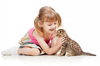 Если ваш ребенок хочет котенка