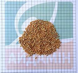 Обработка семян озимой пшеницы перед посевом: Айдамин комплексный для семян с протравителями